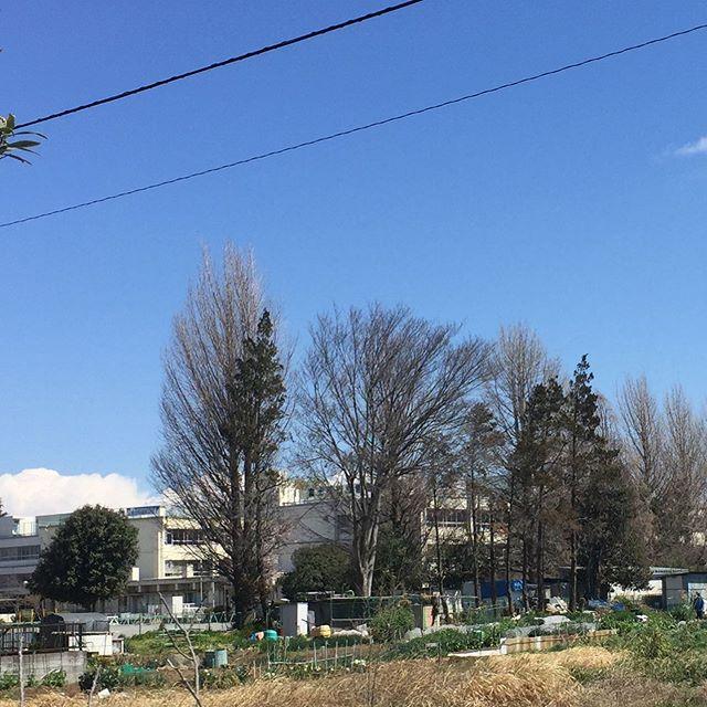 晴天 。  少し風は強いですが、お隣の小学校では、卒業式が行われていました。 校門の桜も、周りの桜も満開。 参列者を減らして、少し寂しい式だったかもしれないですが、その分桜が後押しをしてくれているようです。  今週、途中でお休みをいただく可能性が出てきました。  でも今日はやってます。